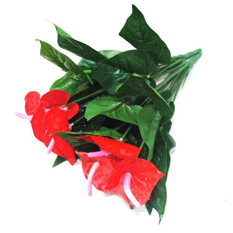 Anthurium green potted anthurium flowers indoor green plants balcony offic s6e7 - Indoor potted flowers ...